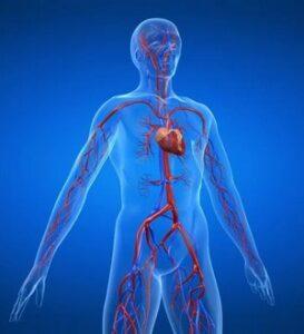 Профилактика и лечение сердечнососудистых заболеваний